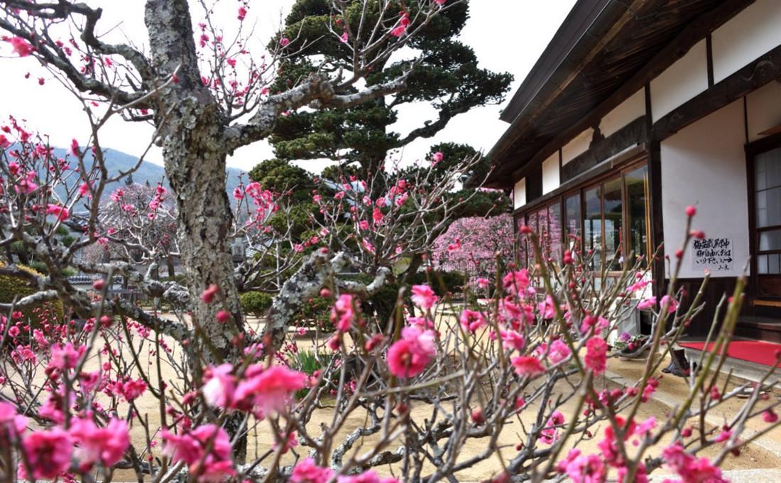 風情ある景色に浸る!岡山の城や寺社で楽しむ早春の花スポット7選