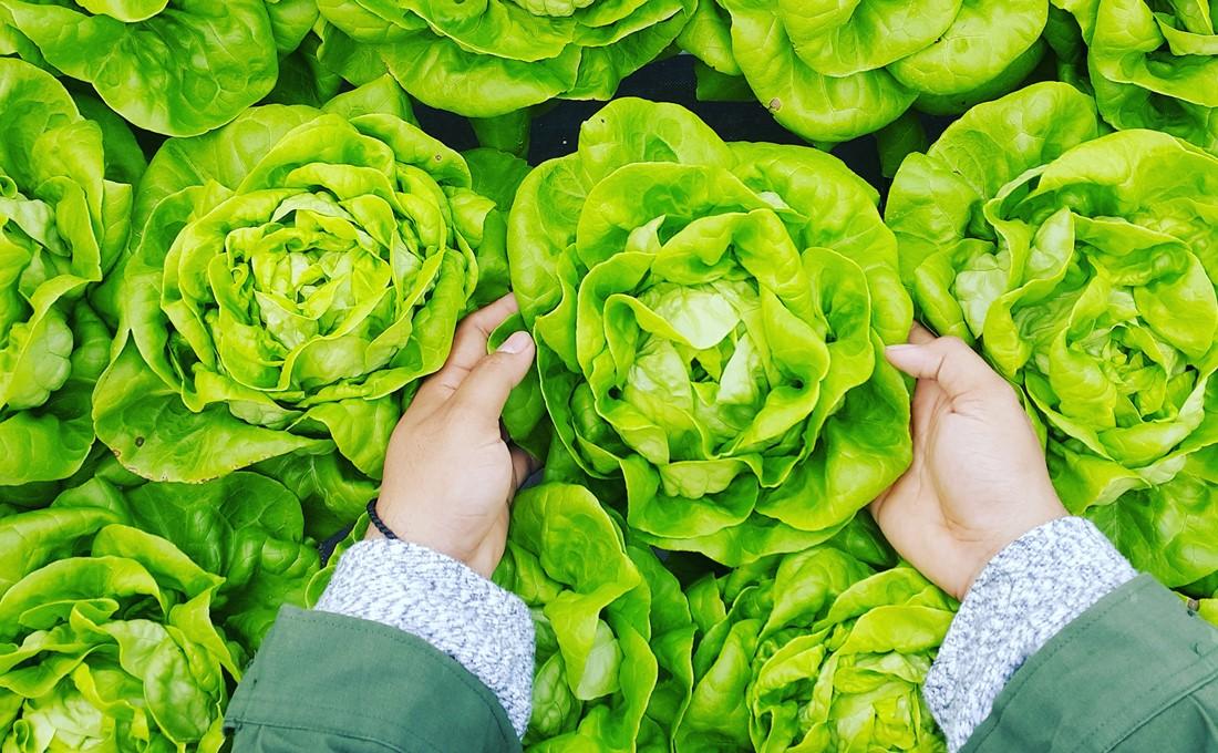 「農福連携」で農家と福祉施設が得られるメリット