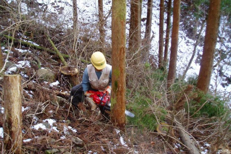 林業振興の最後のチャンス…「森林経営管理制度」の効果~新制度スタート、放置森林を経営者に委託~